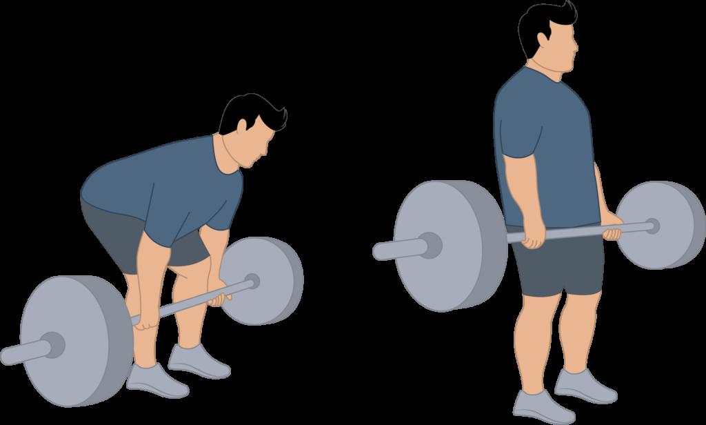 Exercice du soulevé de terre
