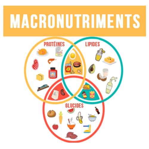 Les macronutriments pour une prise de masse rapide