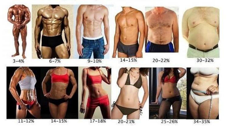 Comparaison homme femme masse musculaire et graisse idéale
