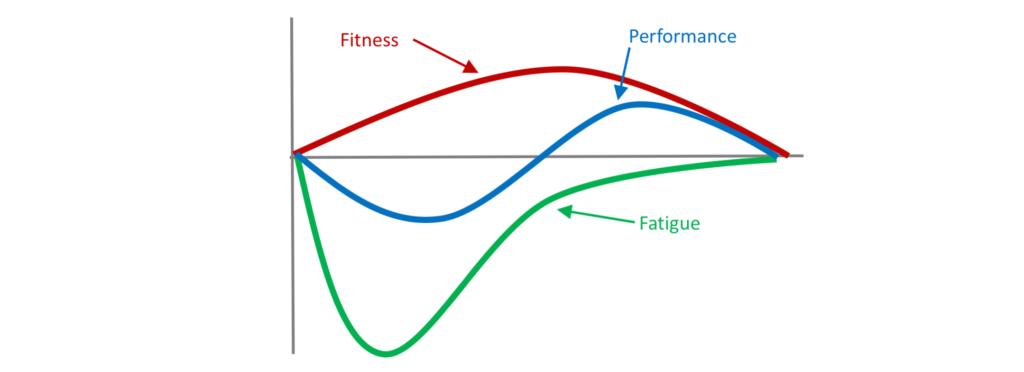 La fatigue et la récupération aux cuisses