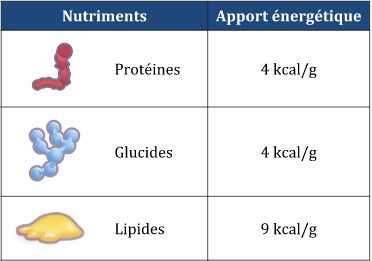 Valeur nutritionnelle glucide, lipides et protéines