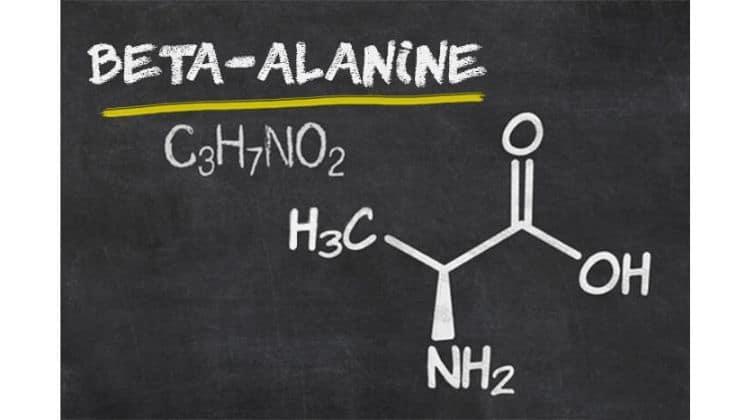 Beta alanine prise de muscle rapide