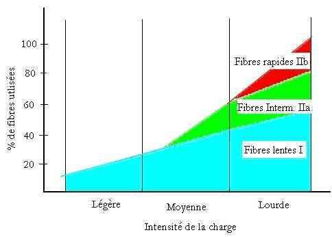 Doser l'électrostimulation pour limiter les risques
