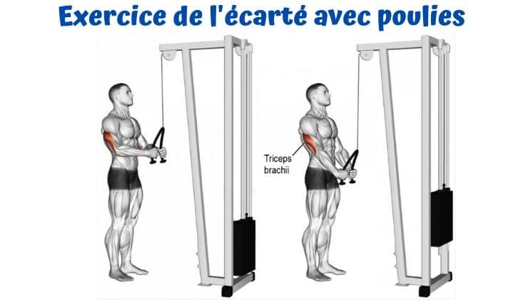 Top 6 Des Exercices Pour Travailler Le Haut Des Pectoraux