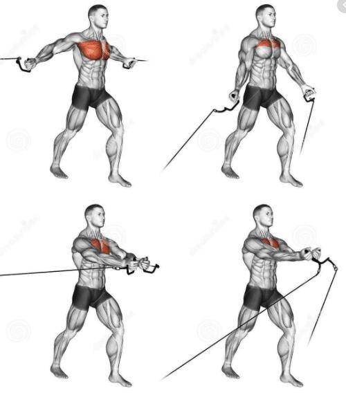 La tension constante de cet exercice permet un stimulus musculaire à vos pectoraux