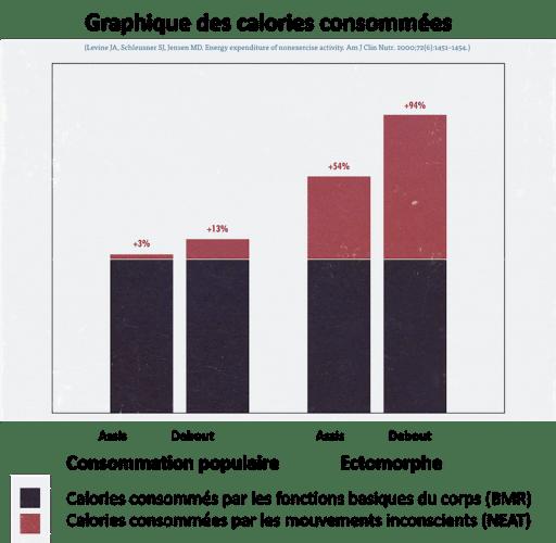 consommation-des-calories-ectomorphe