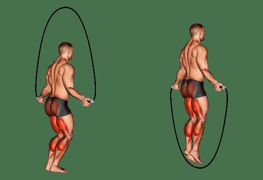 Muscles mobilisés lors de pratique de la corde à sauter