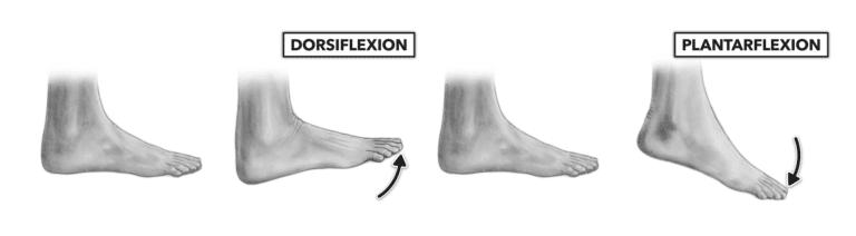 La dorsiflexion permet de muscler vos chevilles en tirant vos orteils à vers l'extérieur et vers l'intérieur.