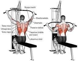 Exercice pour les bras et la poitrine