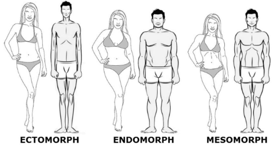 Il existe trois types de morphologies dont les caractéristiques divergent à la prise de masse.
