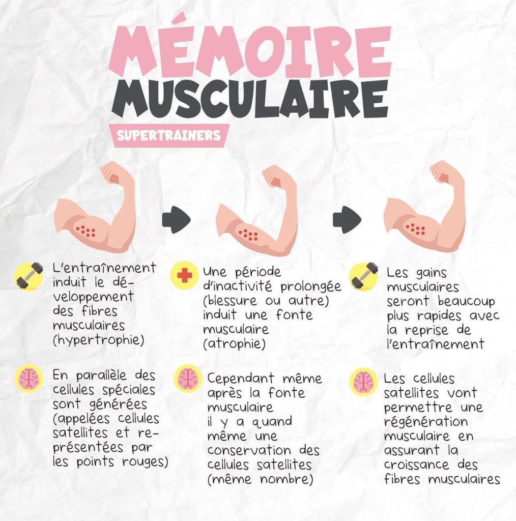 Qu'est ce que la mémoire musculaire ?