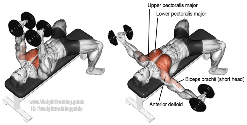 chest fly exercice