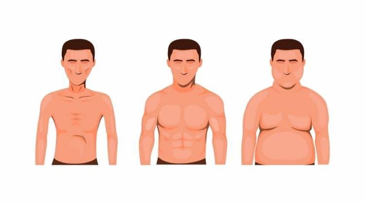 Comment devenir un ectomorphe musclé grâce à la musculation ?