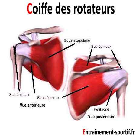 rotateur externe