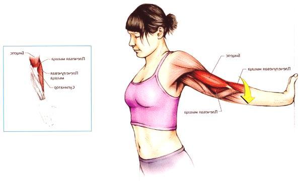 Exercice scapulaire/extension des bras