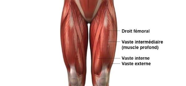 quadriceps muscle