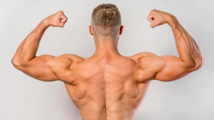 5 exemples de séances dos-biceps pour une prise de masse rapide